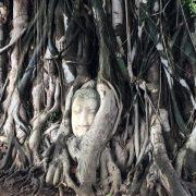 Ayutthaya Tempelanlagen Wat Maha Tat