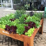 Restaurant - Queen of Hearts - Organic Veggie Garden