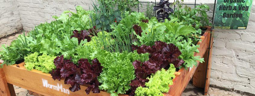 Restaurant - Queen of Hearts - Organic Veggie Garden