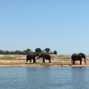 Hallo Deutschland - Elefanten in Afrika
